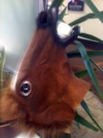 Andrew's Godfather Horse Head for Egg drop