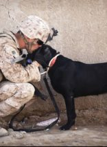 Serviceman and service dog