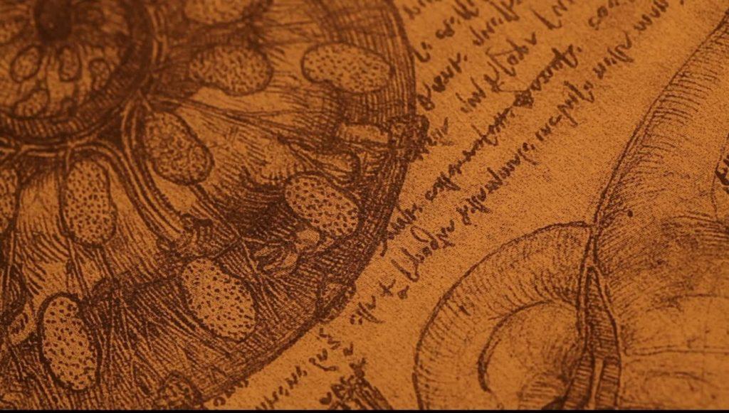 Leonardo da Vinci design anatomy