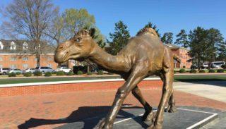 Campbell University Camel